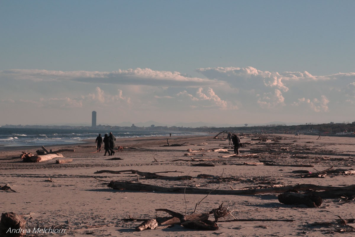 tronchi sulla spiaggia di cervia