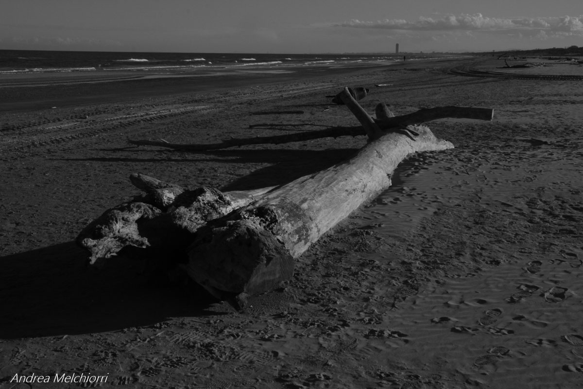 tronco nella spiaggia di cervia